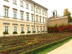 Mirabellen Garten