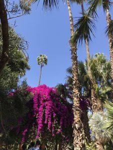 Blühender Jardin Majorelle