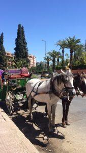 Pferdekutschfahrten sind beliebt in Marrakesch